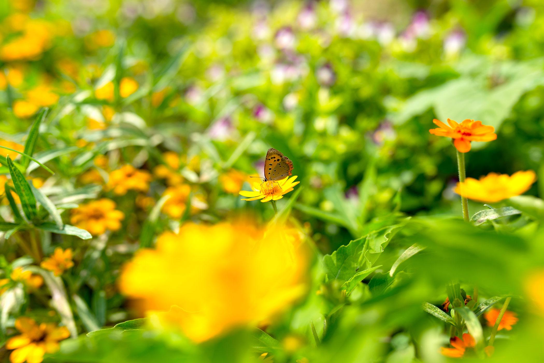 あまの園 アクセス写真 3